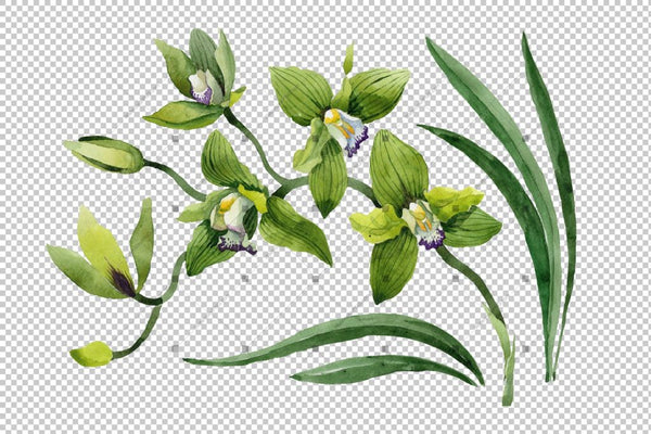 Green Orchid Flower Png Watercolor Set Flower