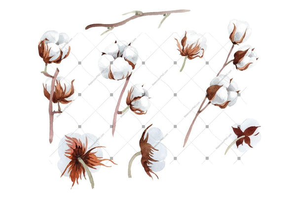 Cotton Soft Flower Png Watercolor Set Flower