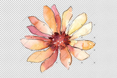 Colorful African Marguerite Png Watercolor Set Flower