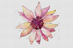African Daisy Flower Watercolor Png Set Flower
