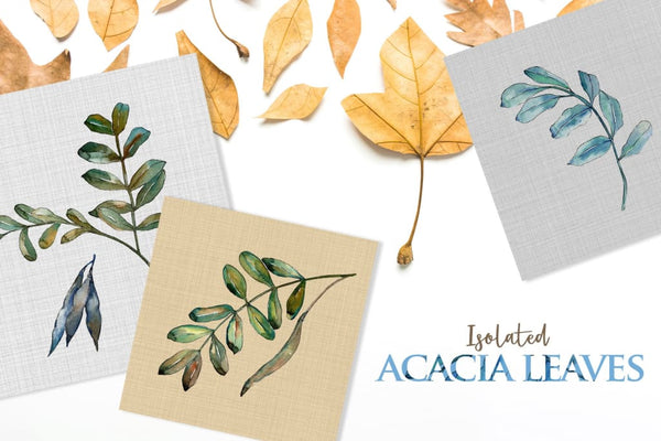 Acacia leaves Watercolor png Digital