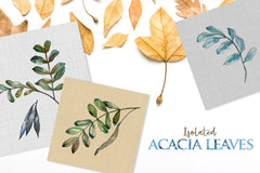Acacia, Watercolor png Digital'i tərk edir
