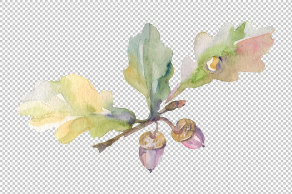 Acorn Watercolor png Flower