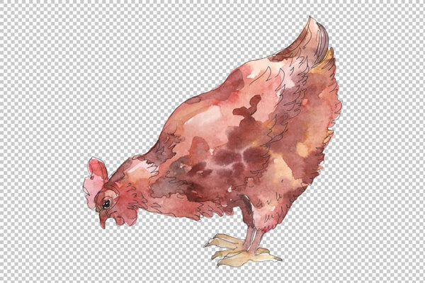 Agriculture: cock hen Watercolor png Flower