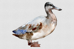 Agriculture: goose duck Watercolor png Flower