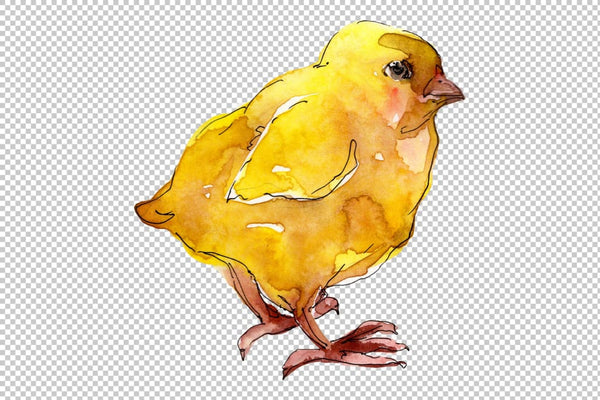 Agriculture: Turkey chicken Watercolor png Flower