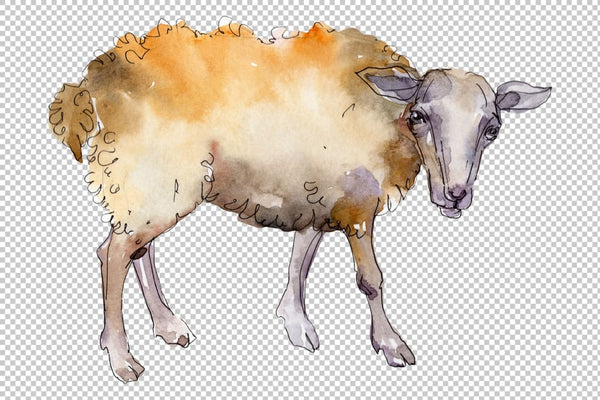 Pertanian: domba ram Watercolor png Flower