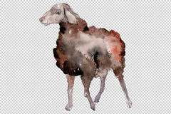 Agriculture:sheep ram Watercolor png Flower
