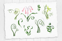 Albuca canadensis flowers Watercolor png Digital