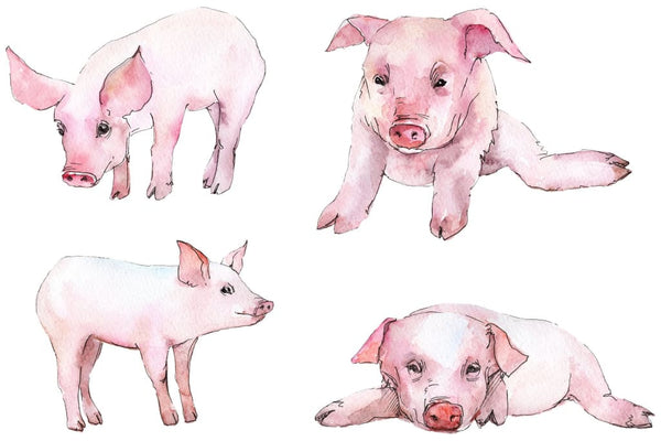 Animal pig watercolor png Flower