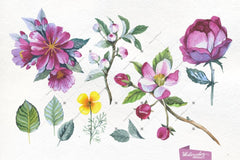 Apple Blossom Png Flowers Watercolor Set Digital