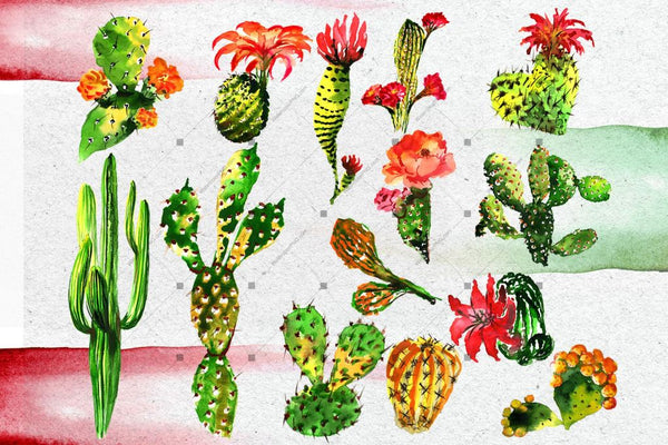 Aquarelle Green Cactus Png Set Digital
