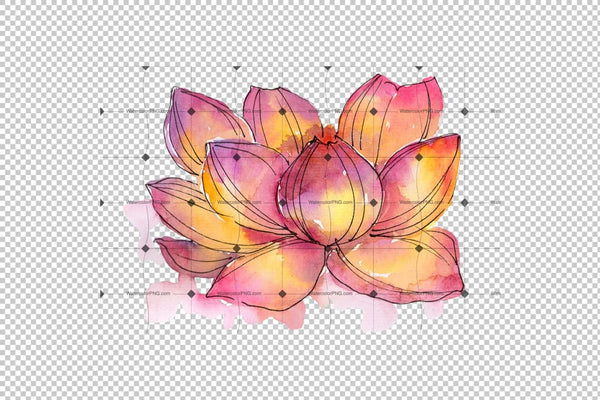 Aquarelle Lotus Flowers Png Set Flower