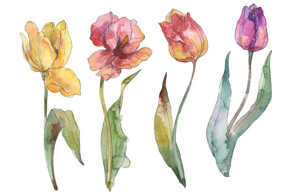 Assorted tulip bouquet Watercolor png Flower