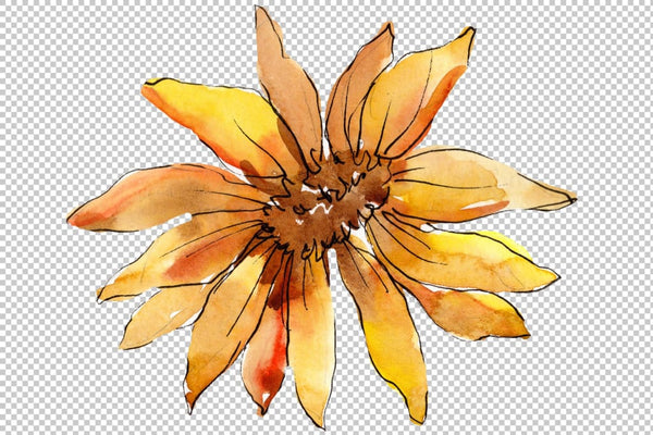 Aster flowers yellow- red watercolor png Flower