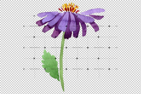 Asters Watercolor png Flower