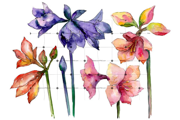 Beautiful Watercolor Amaryllis Png Set Flower
