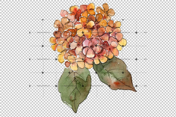 Big Colorful Gortenzia Flowers Png Set Flower