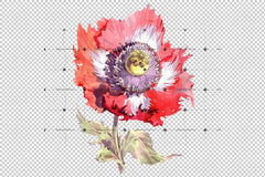 Big Red Poppy Flower Png Set de flori de acuarelă