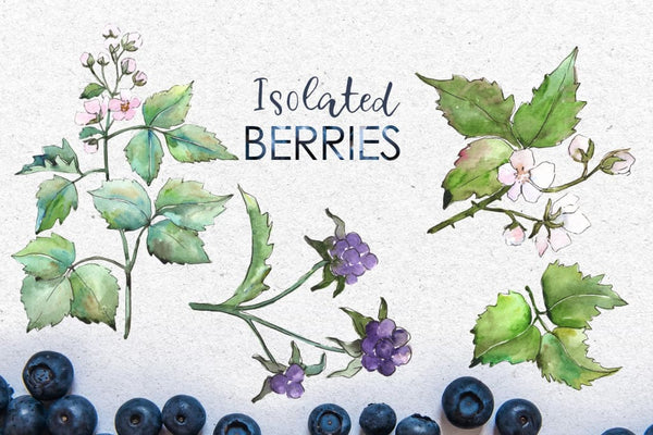 Blackberry Watercolor png