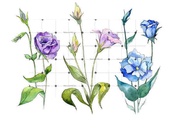 Blue And Purple Eustoma Png Watercolor Set Flower
