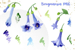 Blue brugmansia flower watercolor png Digital