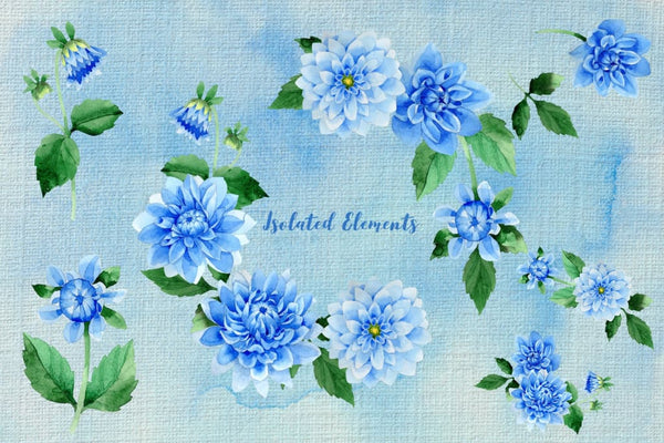 Blue dahlia great flowers PNG watercolor set Digital