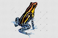 Blue Frog Png Watercolor Set Digital