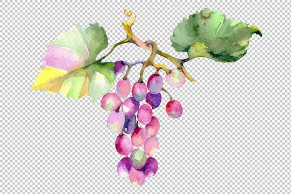 Blue grapes Watercolor png Flower