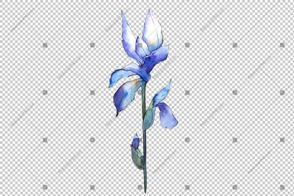 Blue Irises Flowers Watercolor Png Flower