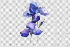 Biru Irises Flowers Watercolor Png Flower