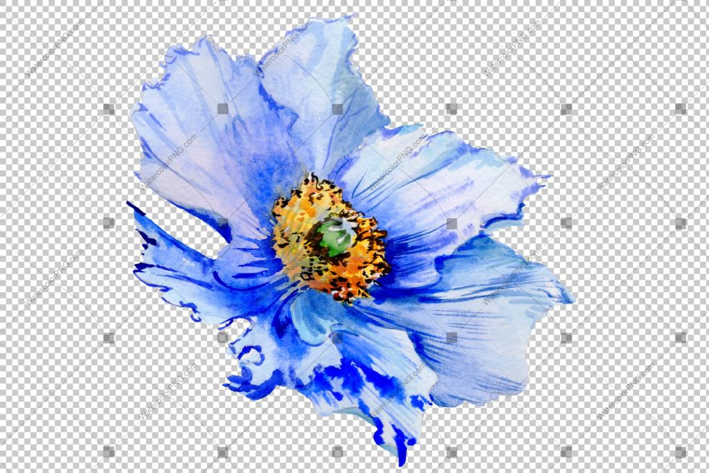 Blue Poppy Watercolor Flowers Png Watercolorpng