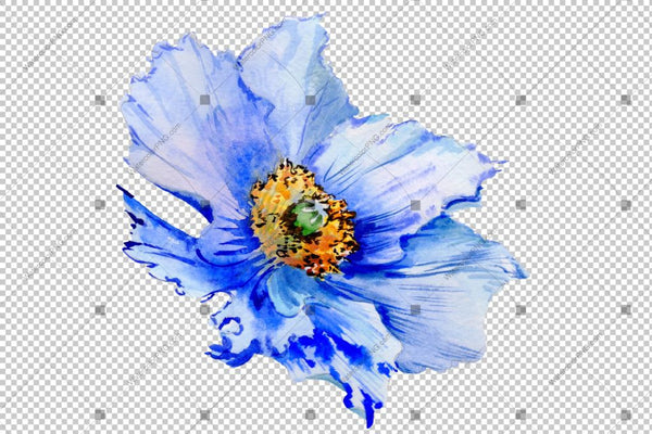 Blue Poppy Watercolor Flowers Png Flower