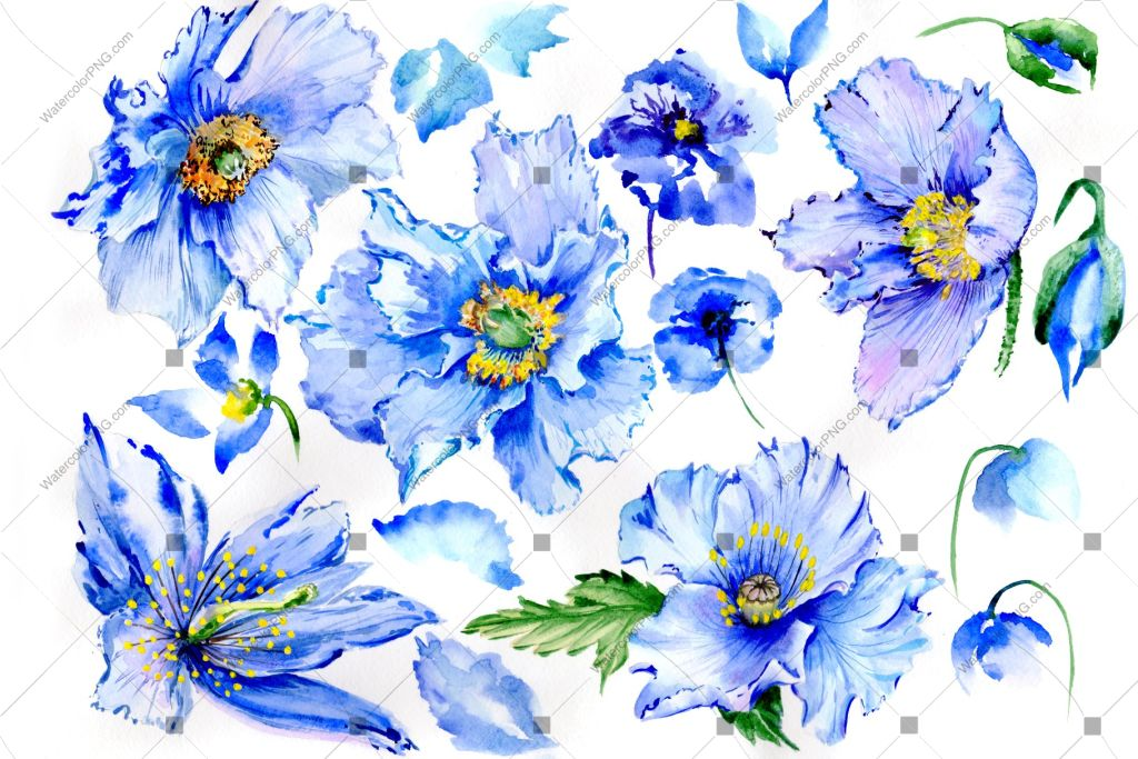 Blue poppy watercolor flowers PNG