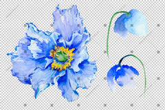 Blue Poppy Akvarel Rože Png Flower