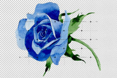 Blue Rose Wildflower Flower In A Hand-Drawn Watercolor Png Style Flowering Isolated