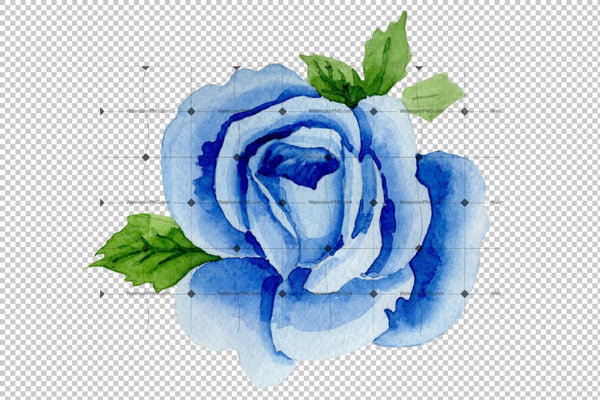 Blue Rose Wildflower Flower In A Hand-Drawn Watercolor Png Style Isolated Flower