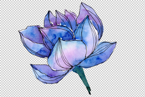 Blue watercolor lotus flower png Flower