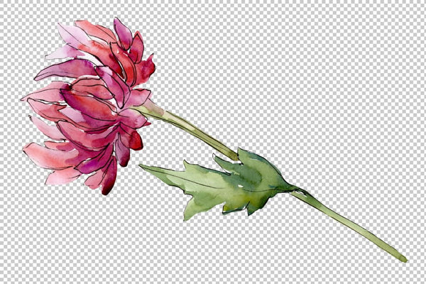 Bouquet of flowers aster Forest Fairy watercolor PNG Flower