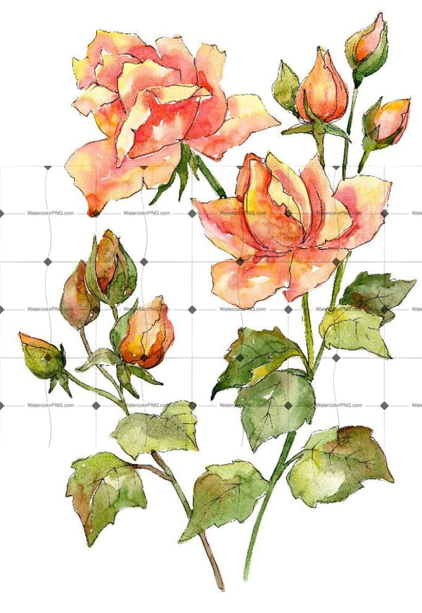 Bouquet Of Wonderful Roses Png Watercolor Set Flower