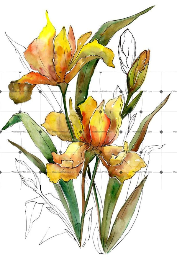 Bouquet Of Yellow Irises Png Watercolor Set Flower
