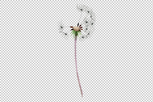 Bouquet rainbow dandelion watercolor png Flower