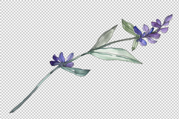 Bouquet summer breeze lavender watercolor png Flower