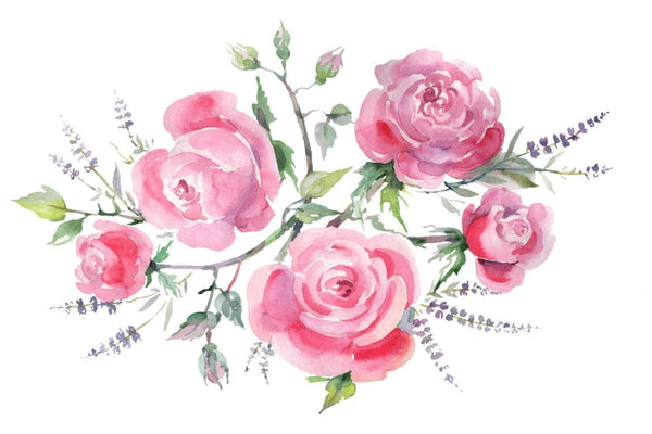 Bouquet with roses and lavender pink Watercolor png Flower