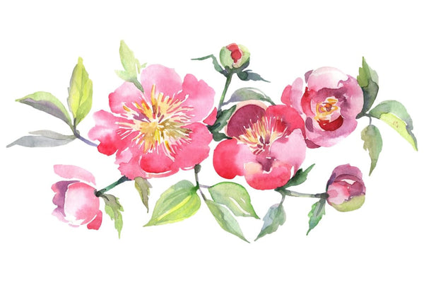 Bouquet with tea pink roses Watercolor png Flower