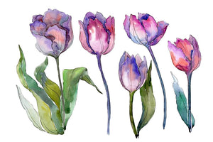 Bouquet with tulips Diodorus watercolor png Flower