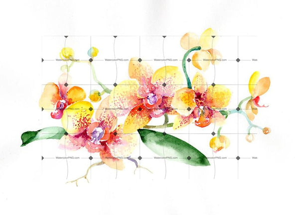 Bouquet Yellow Orchid Flower Png Watercolor Set Flower