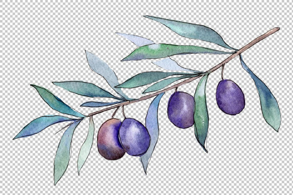 Branch olive watercolor png Flower