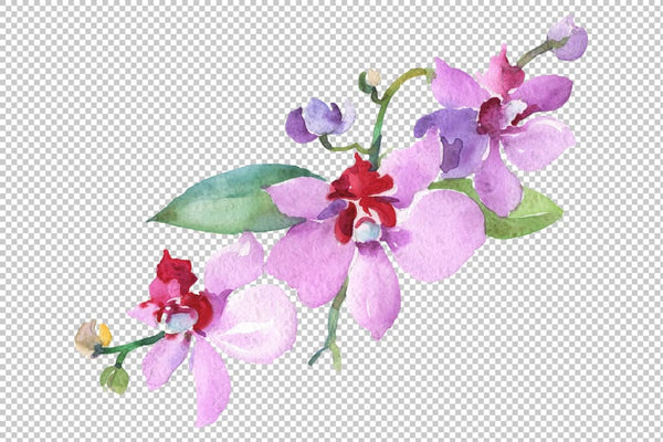 Branch with orchids Watercolor png Flower