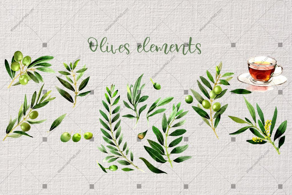 Branches Of Olive Tree Png Watercolor Set Digital